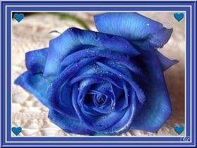 imrose-bleuSans-titre.jpg